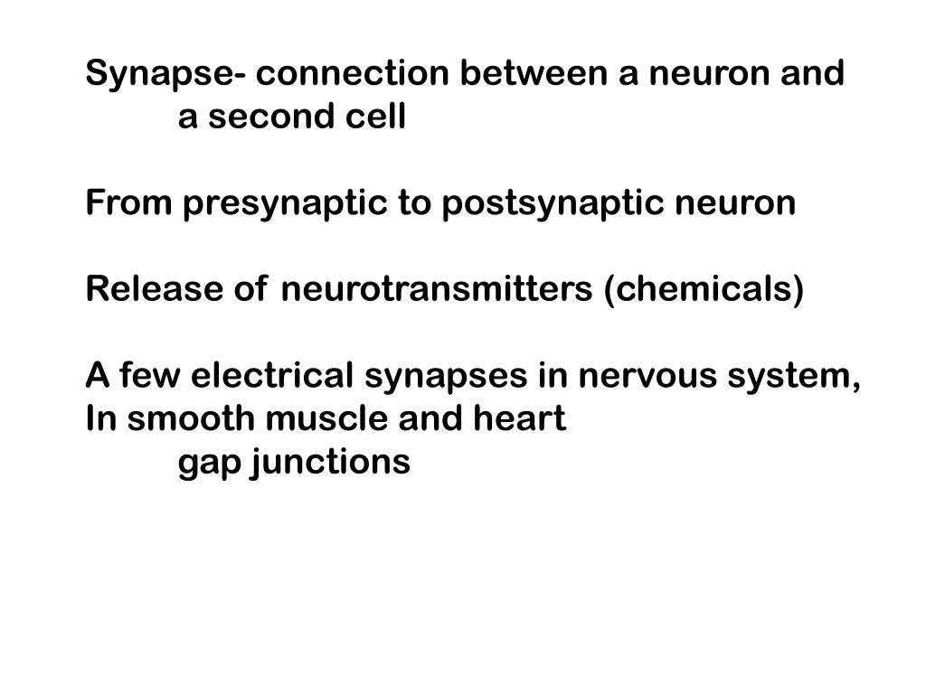 Synapse- connection between a neuron and