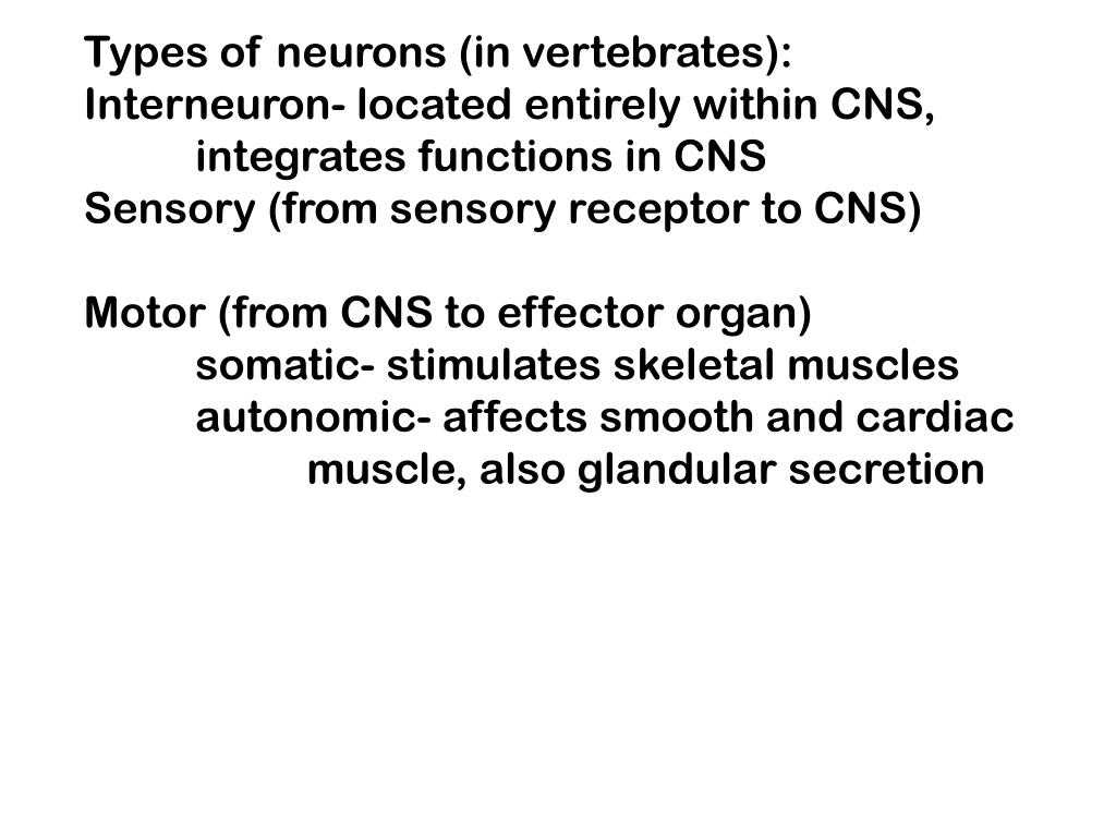 Types of neurons (in vertebrates):