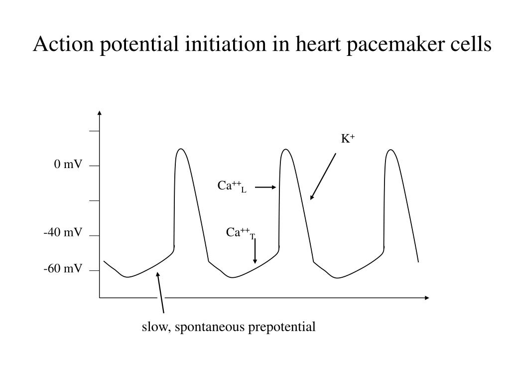 Action potential initiation in heart pacemaker cells