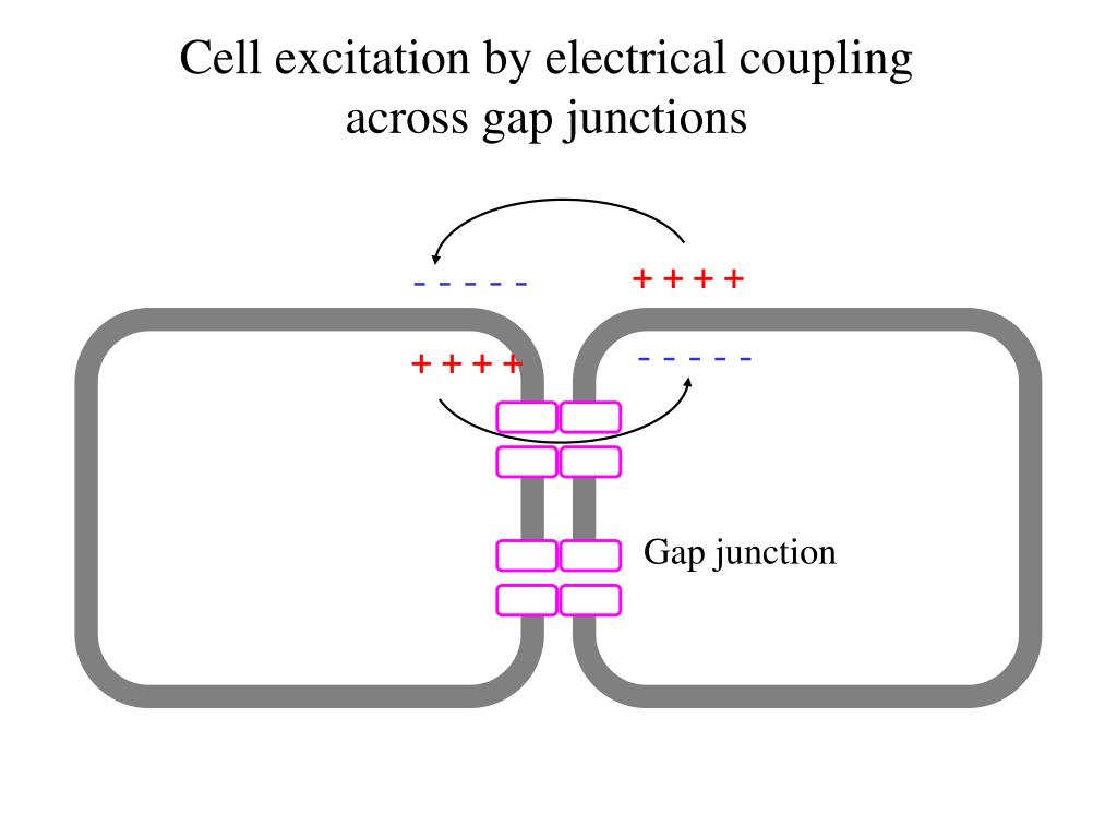 Cell excitation by electrical coupling