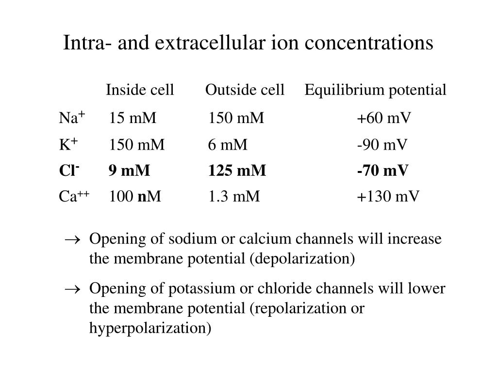 Inside cellOutside cellEquilibrium potential