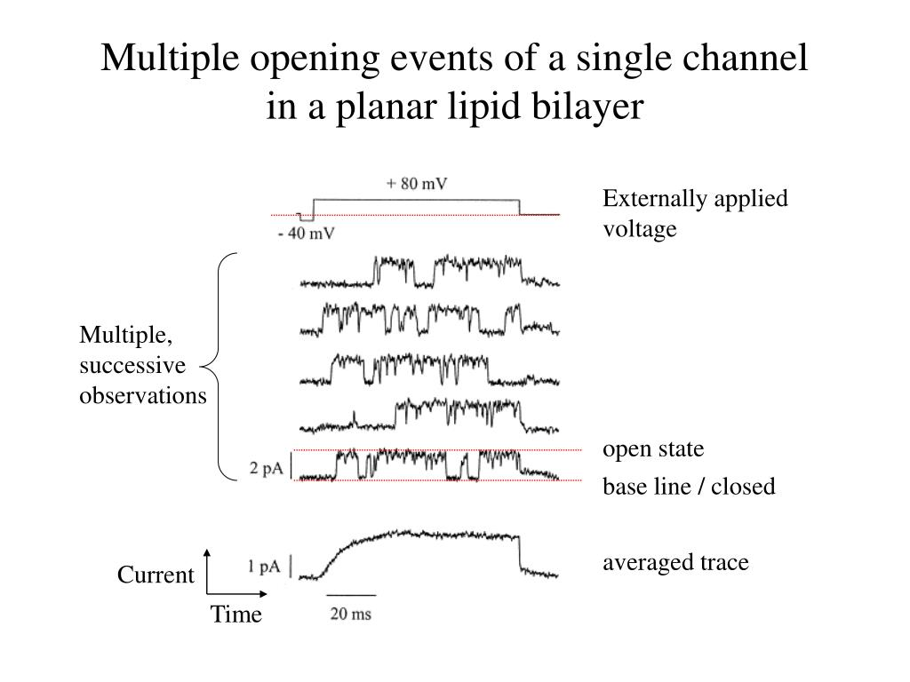 Multiple opening events of a single channel