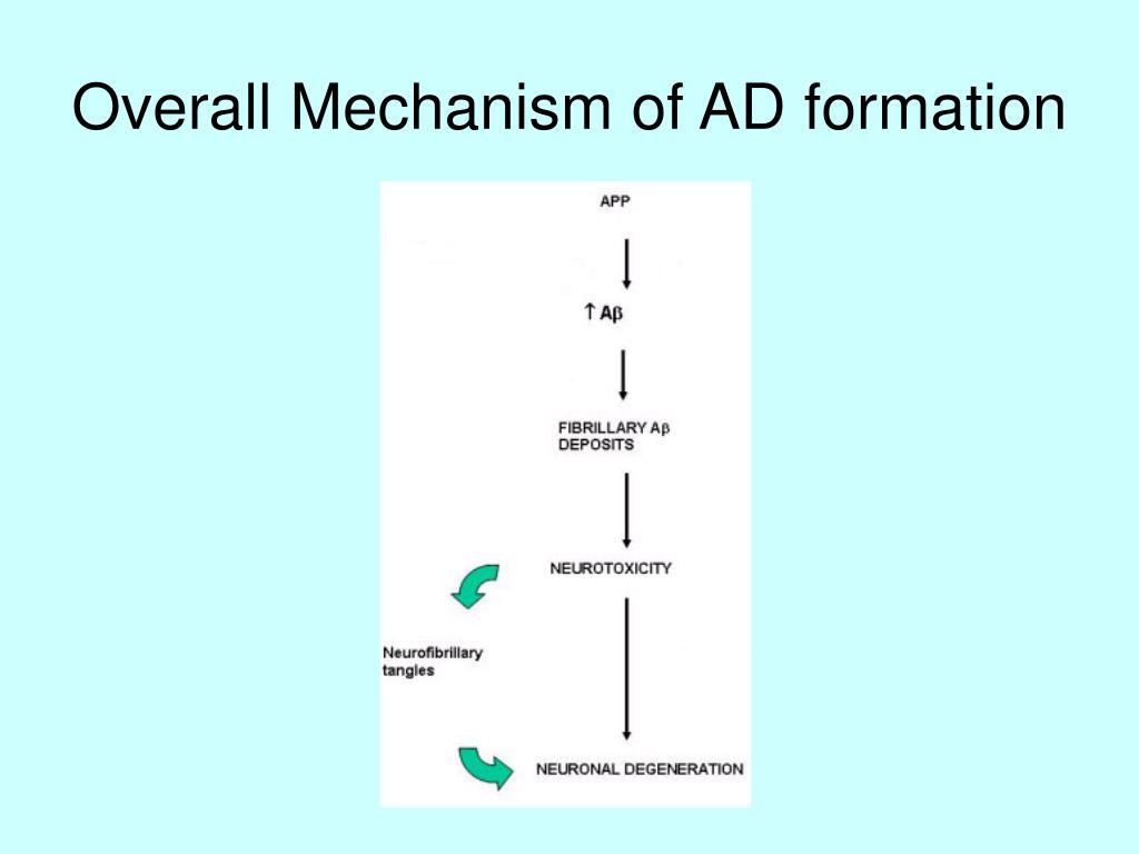 Overall Mechanism of AD formation