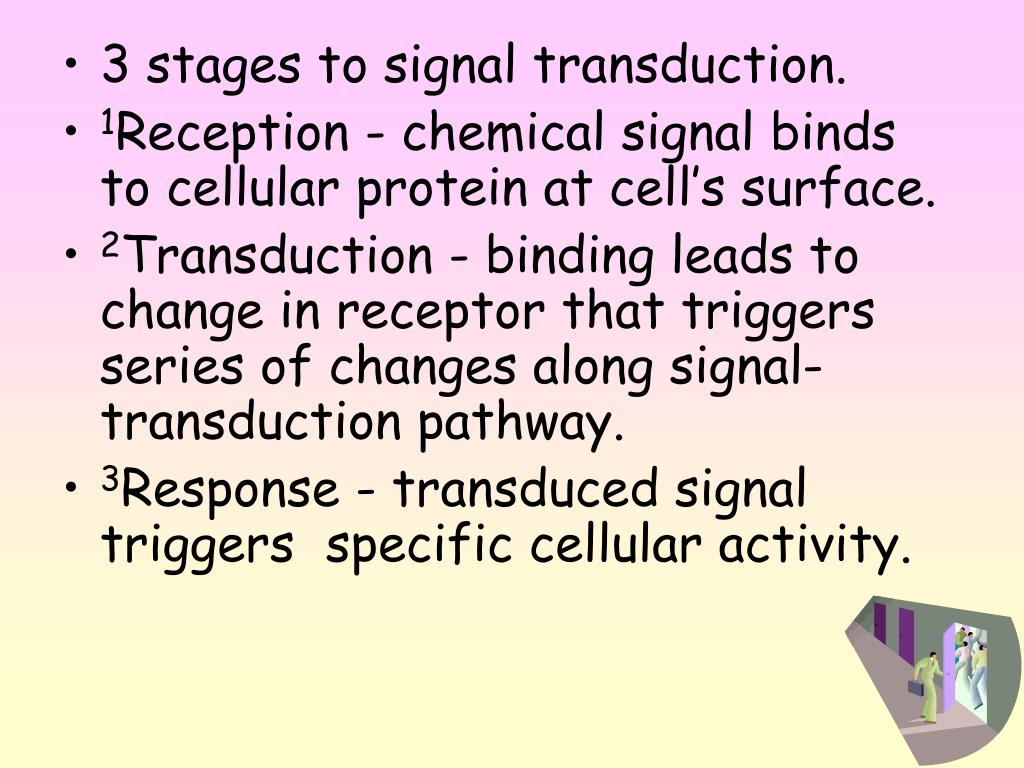 3 stages to signal transduction.
