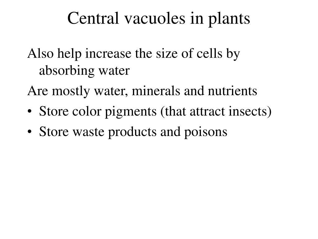 Central vacuoles in plants