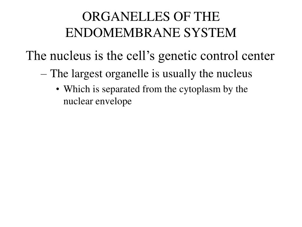 ORGANELLES OF THE ENDOMEMBRANE SYSTEM