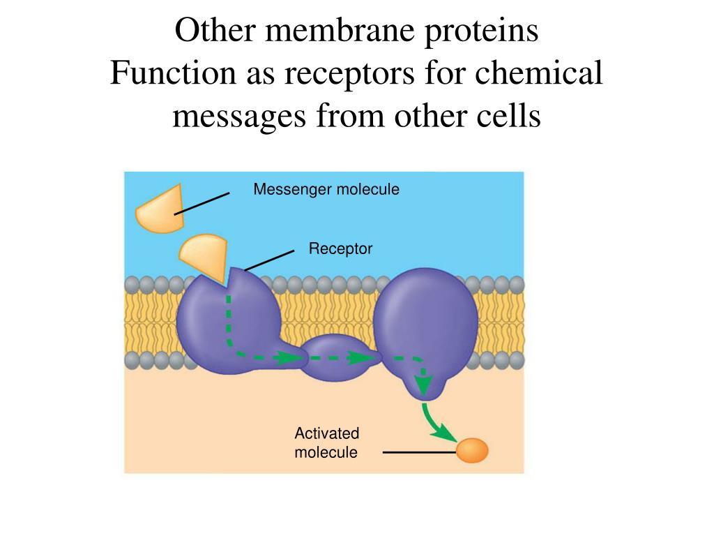 Messenger molecule