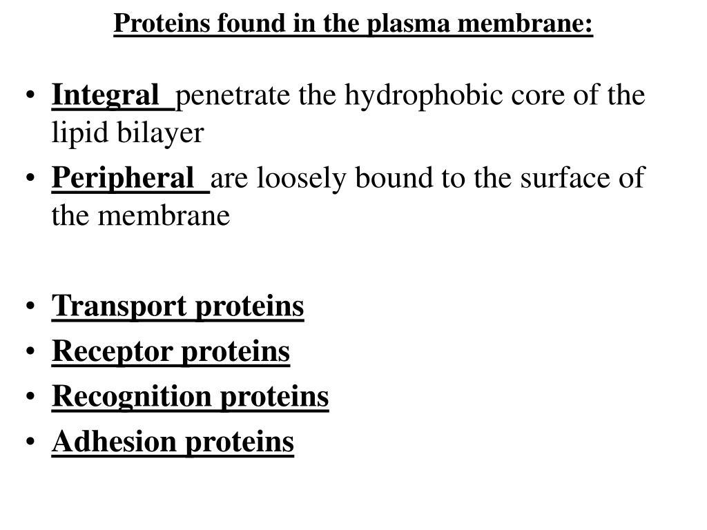 Proteins found in the plasma membrane: