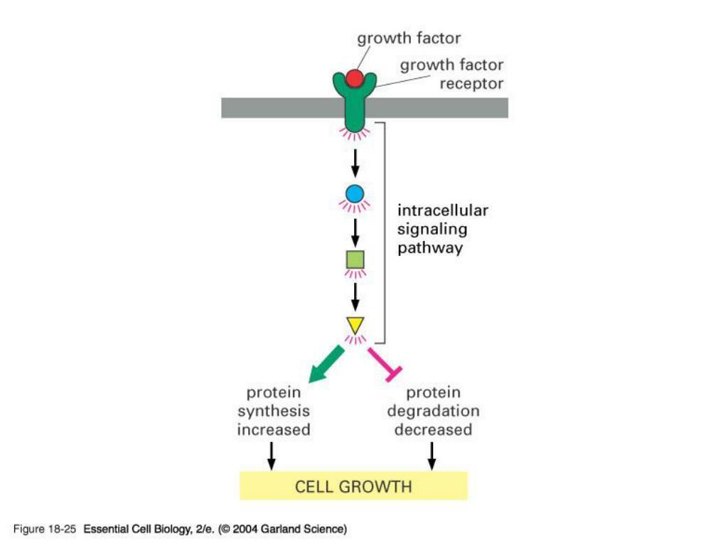 18_25_growth_factors.jpg