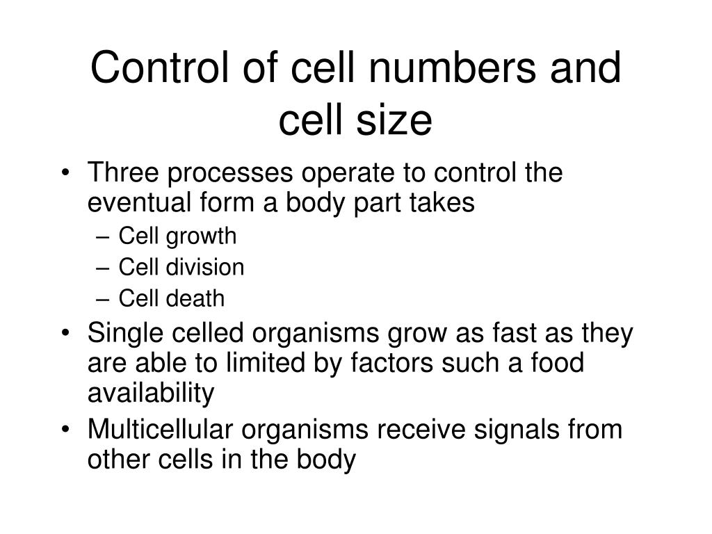 Control of cell numbers and cell size