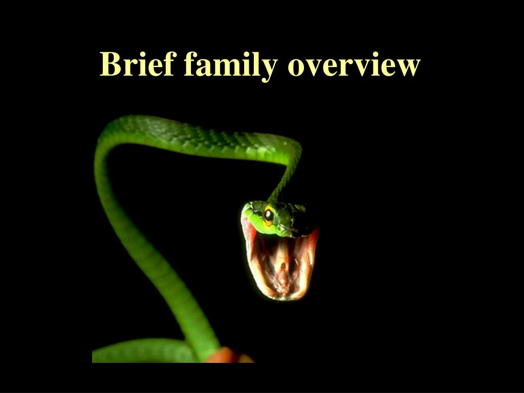 Brief family overview