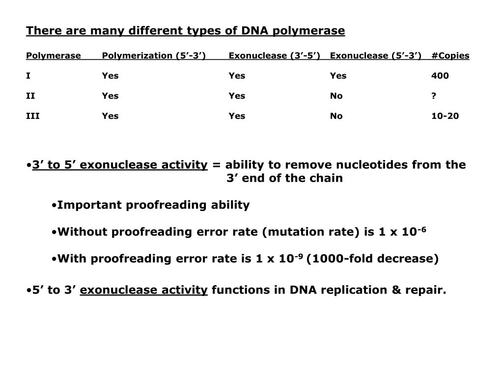 There are many different types of DNA polymerase