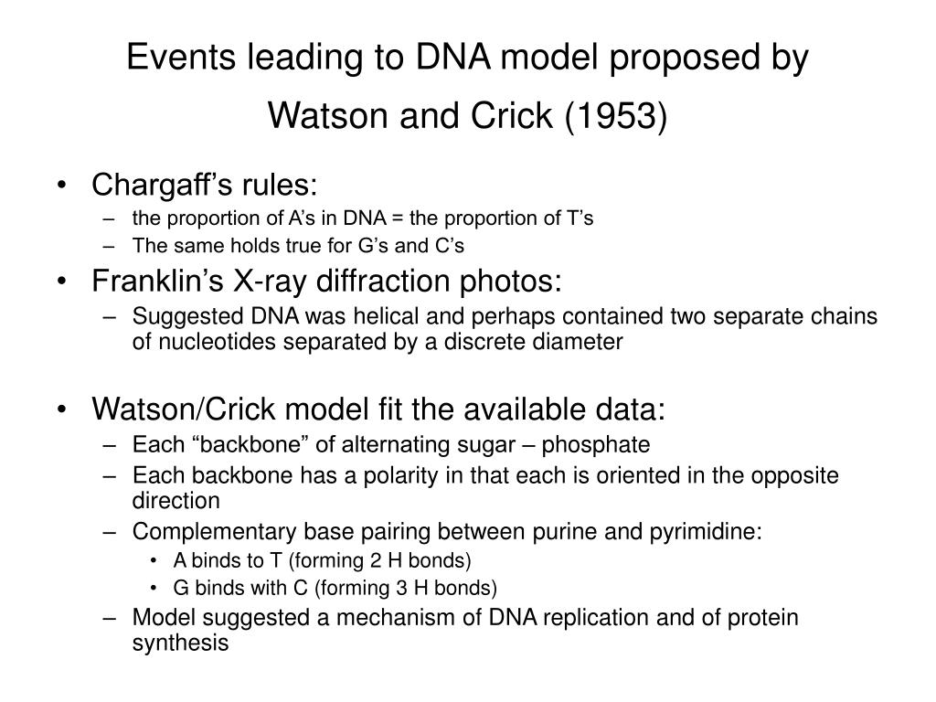 Events leading to DNA model proposed by