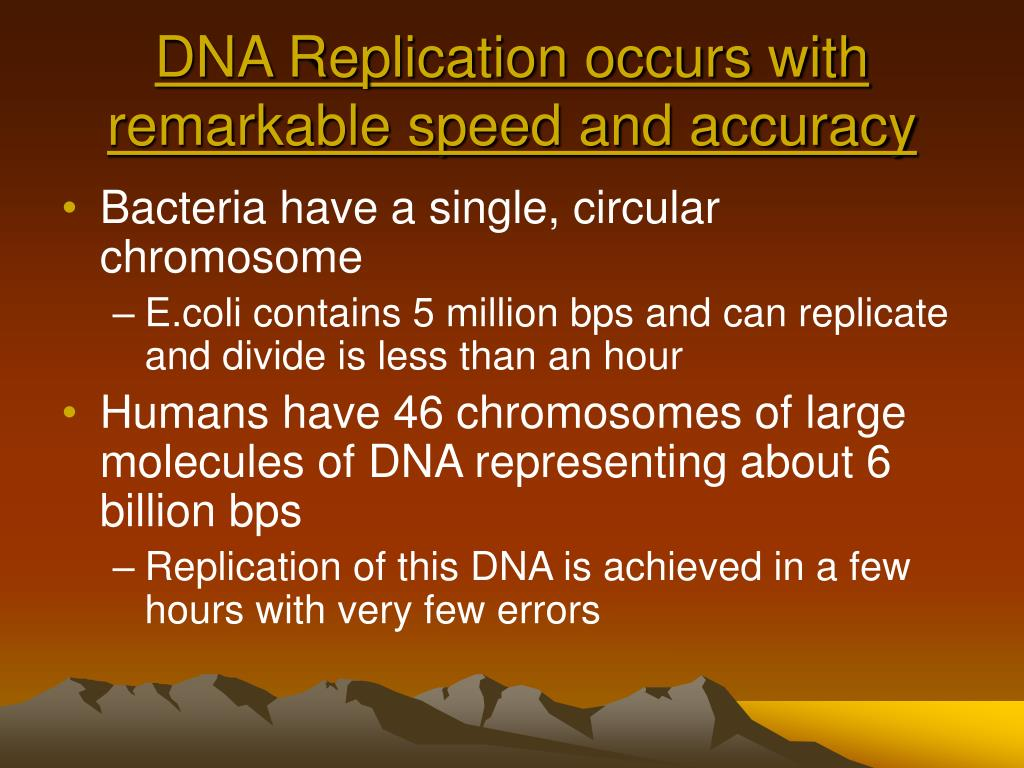 DNA Replication occurs with remarkable speed and accuracy