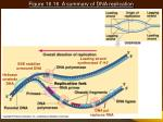 figure 16 16 a summary of dna replication20
