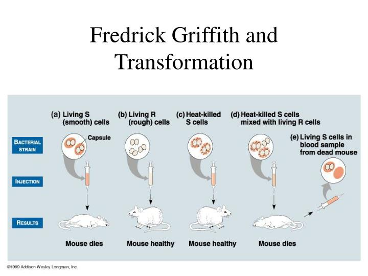 Fredrick griffith and transformation