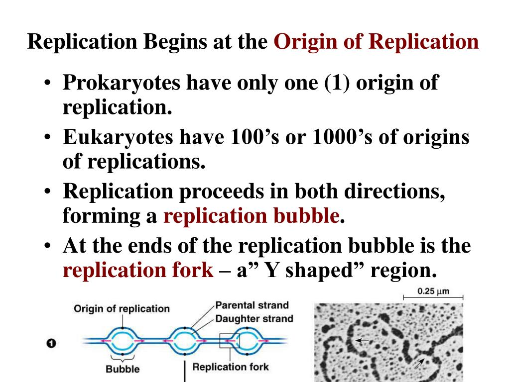 Replication Begins at the