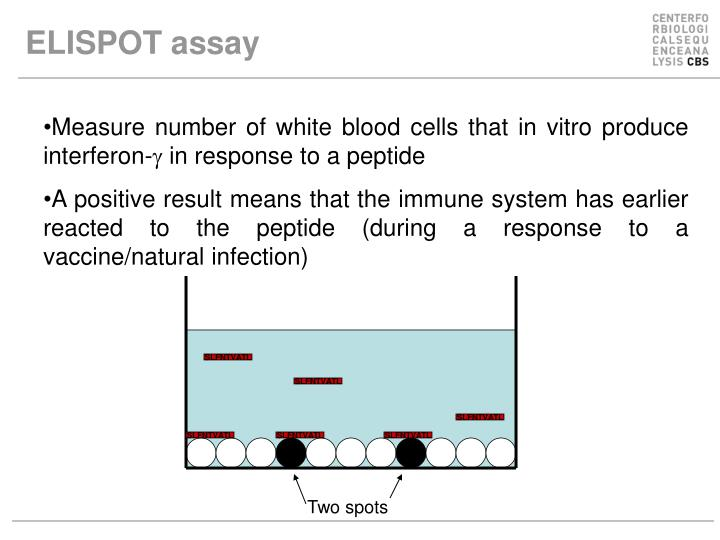 ELISPOT assay