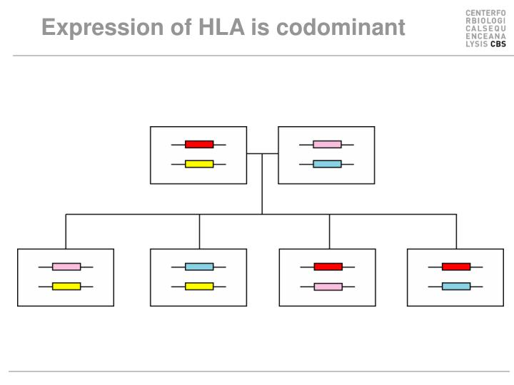 Expression of HLA is codominant