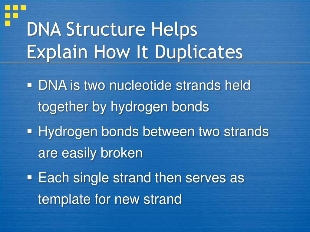 DNA Structure Helps