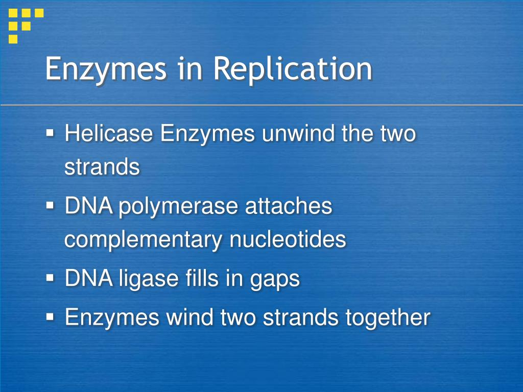 Enzymes in Replication