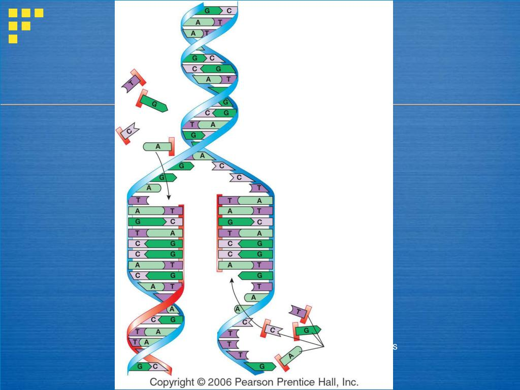 free nucleotides