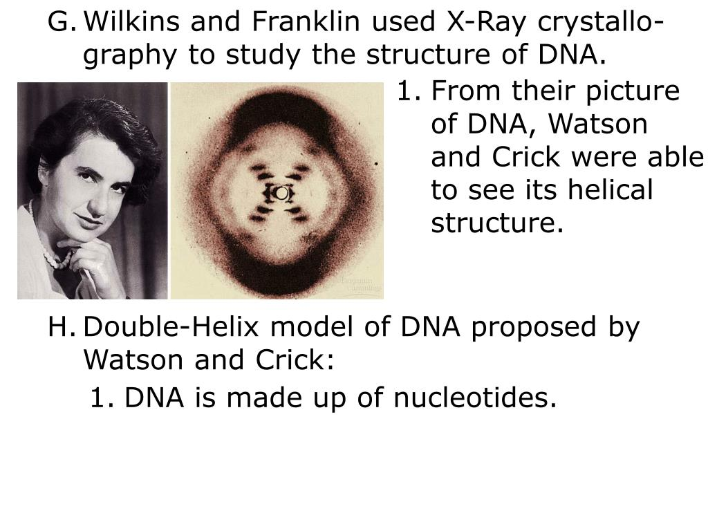 Wilkins and Franklin used X-Ray crystallo-