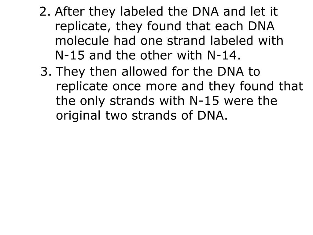 After they labeled the DNA and let it