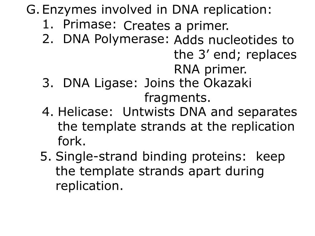 Enzymes involved in DNA replication: