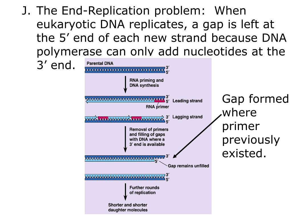 The End-Replication problem:  When