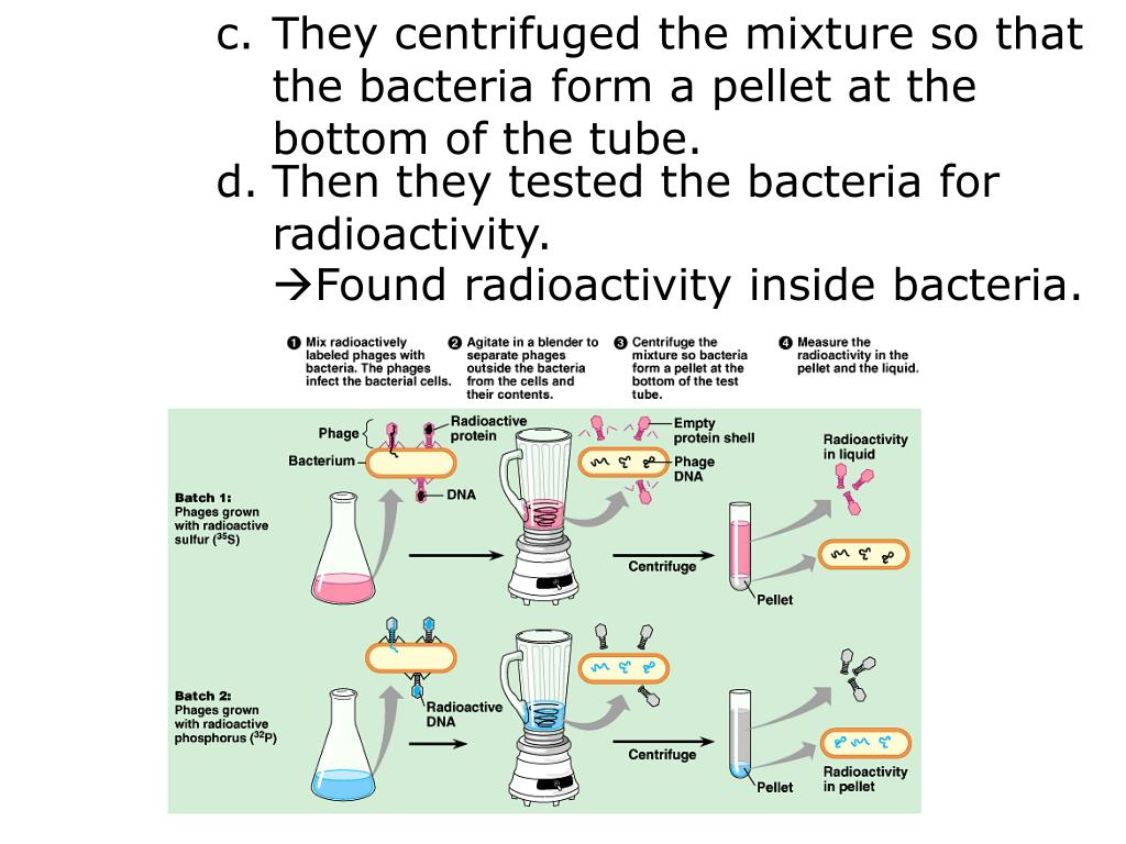 They centrifuged the mixture so that