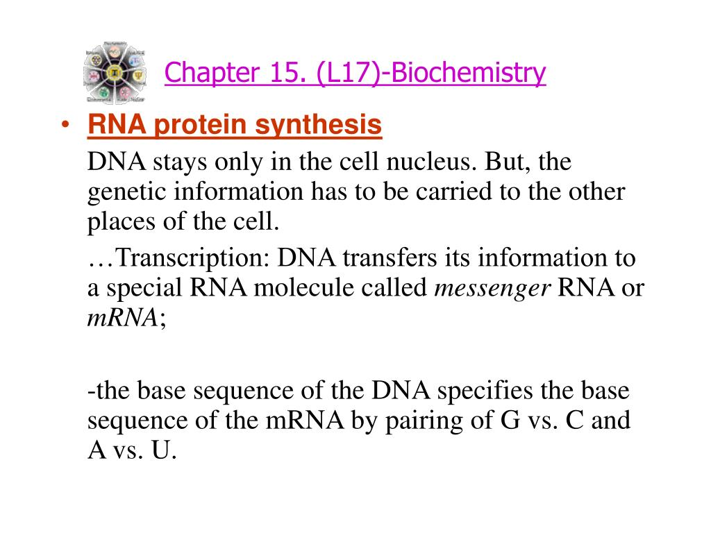 Chapter 15. (L17)-Biochemistry