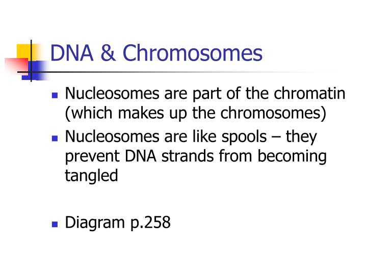 DNA & Chromosomes