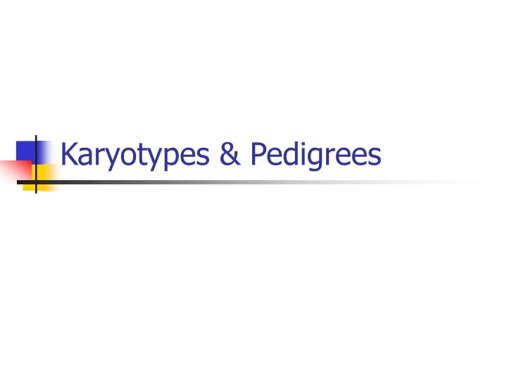 Karyotypes & Pedigrees