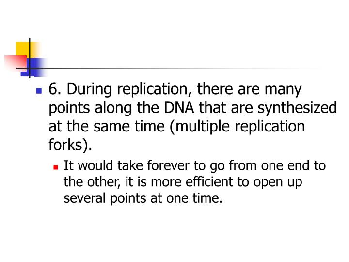 6. During replication, there are many points along the DNA that are synthesized at the same time (multiple replication forks).