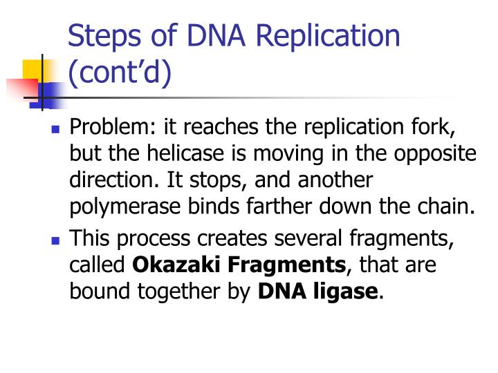 Steps of DNA Replication (cont'd)