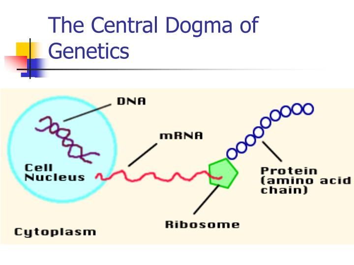 The Central Dogma of Genetics