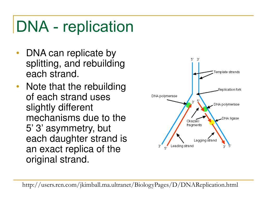 DNA - replication