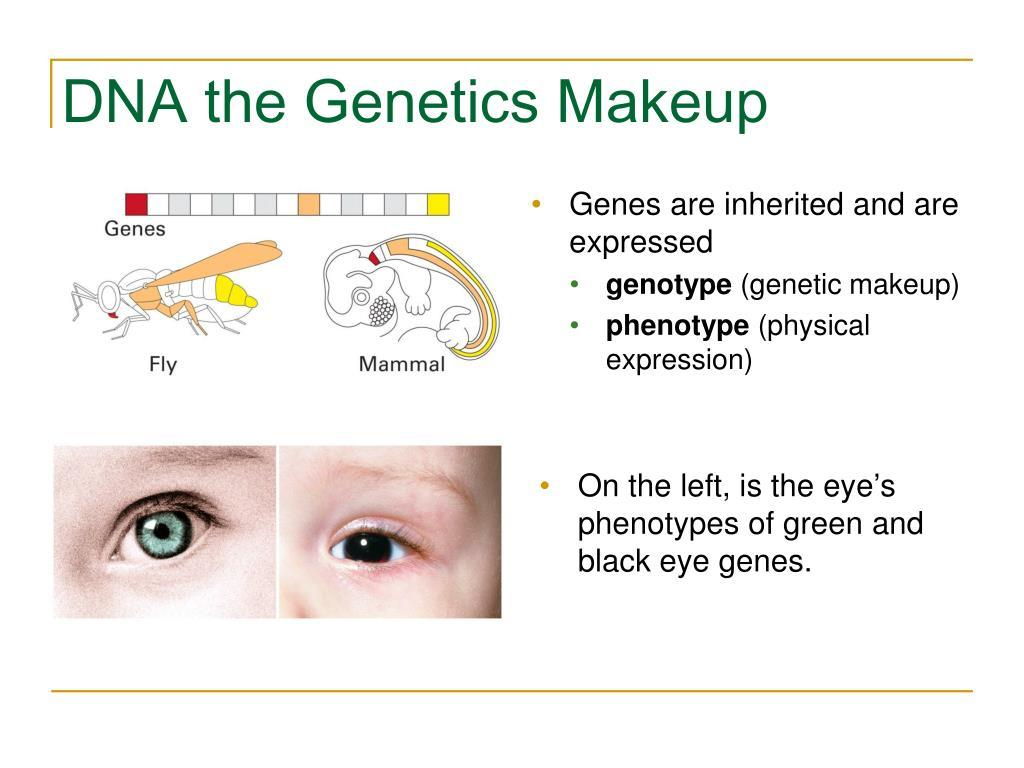 DNA the Genetics Makeup
