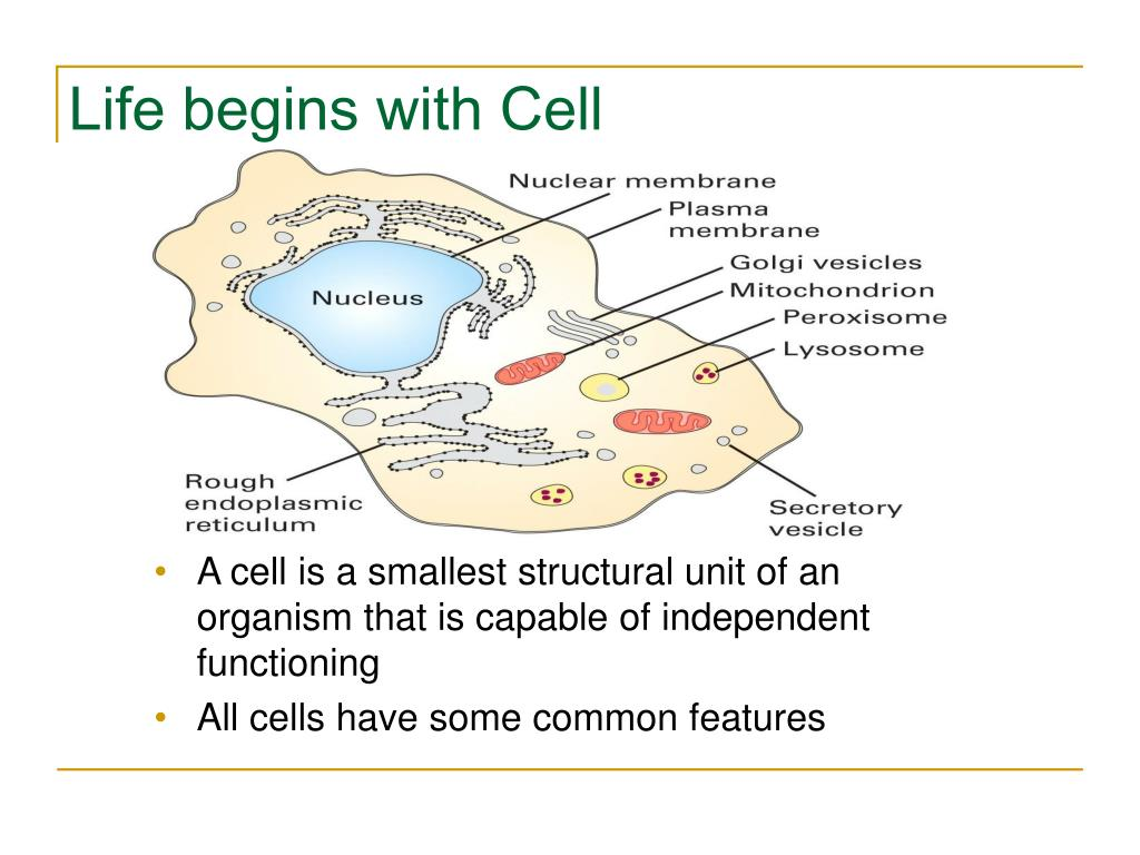 Life begins with Cell