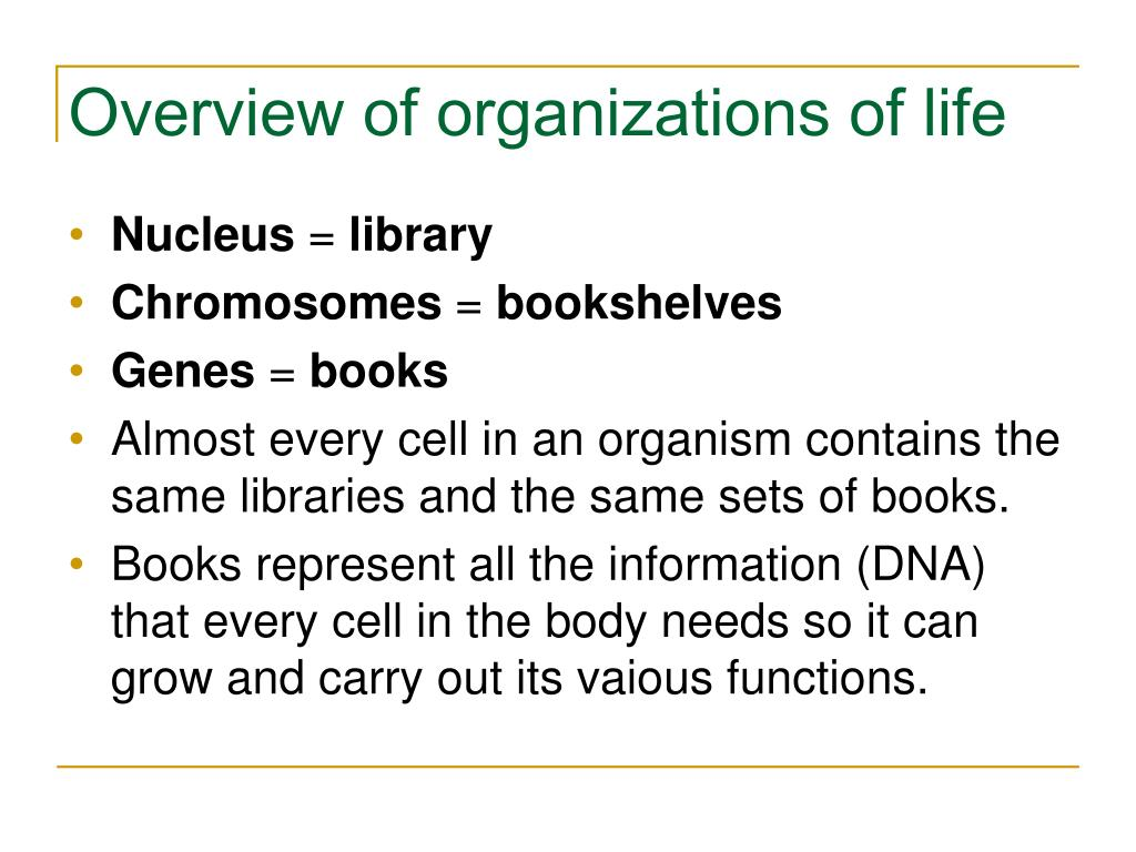 Overview of organizations of life