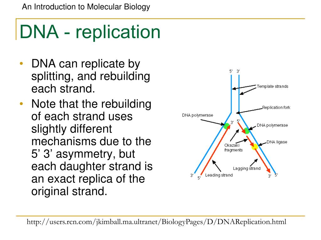 DNA - replication