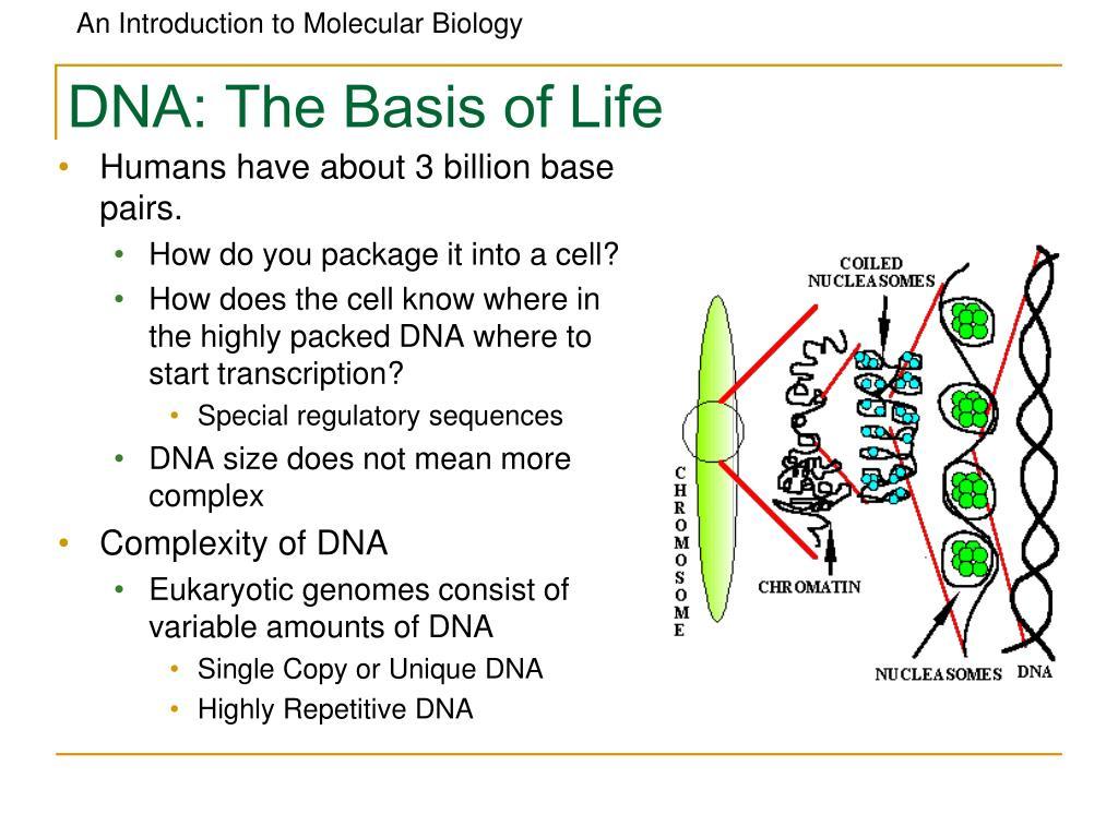 DNA: The Basis of Life