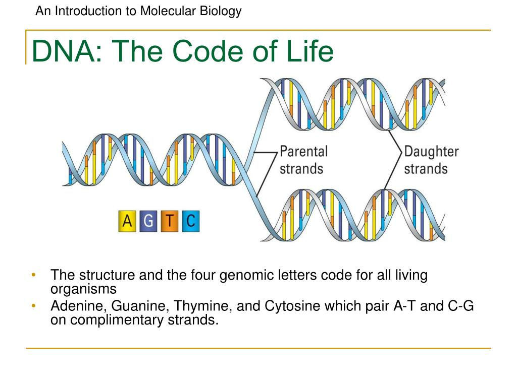 DNA: The Code of Life