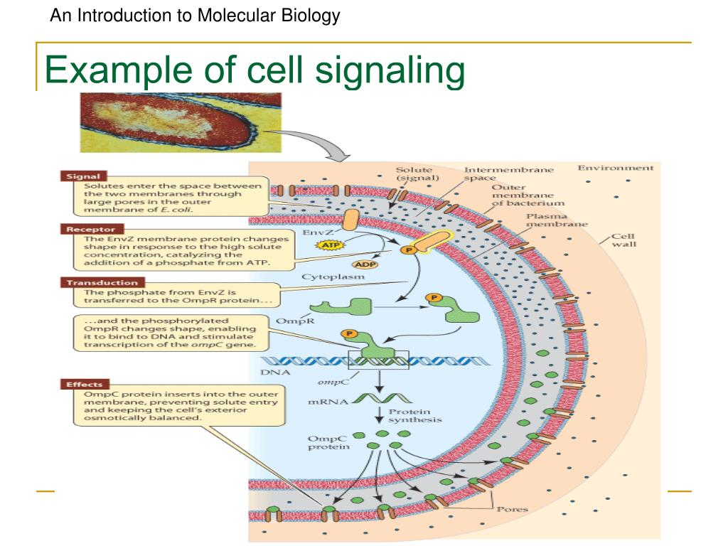 Example of cell signaling