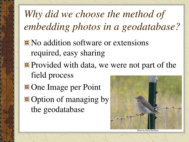 Why did we choose the method of embedding photos in a geodatabase?