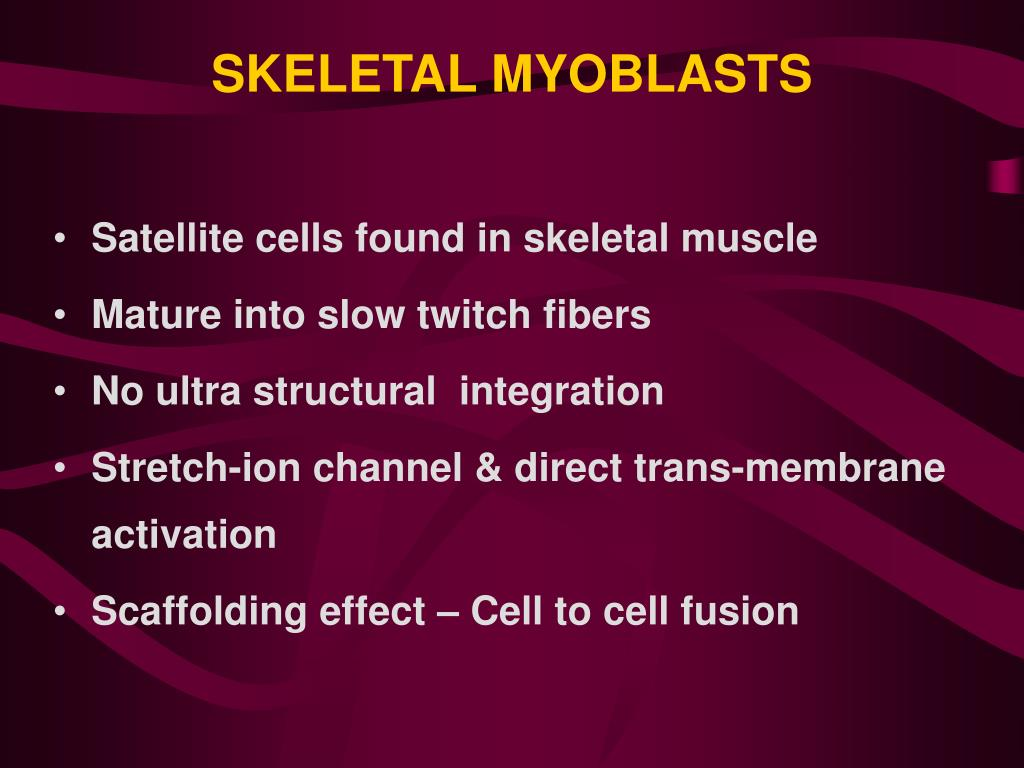 SKELETAL MYOBLASTS