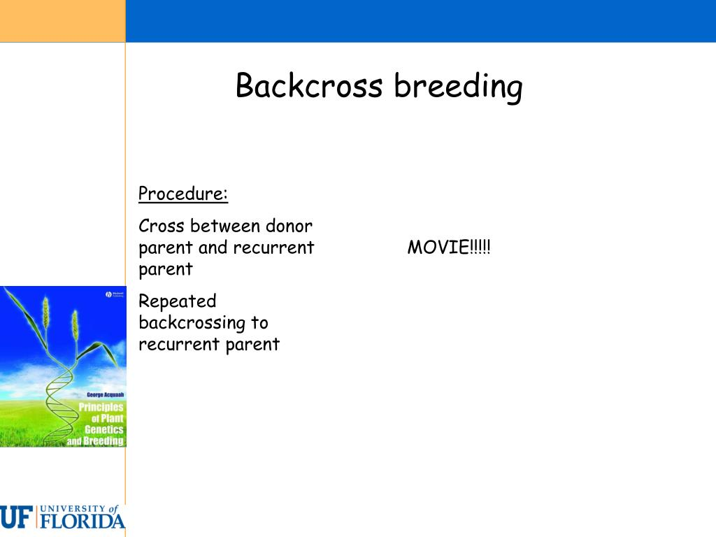 Backcross breeding