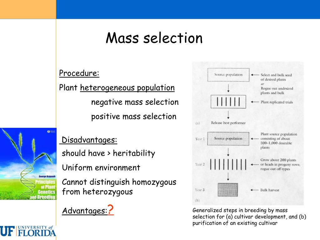Generalized steps in breeding by mass selection for (a) cultivar development, and (b) purification of an existing cultivar