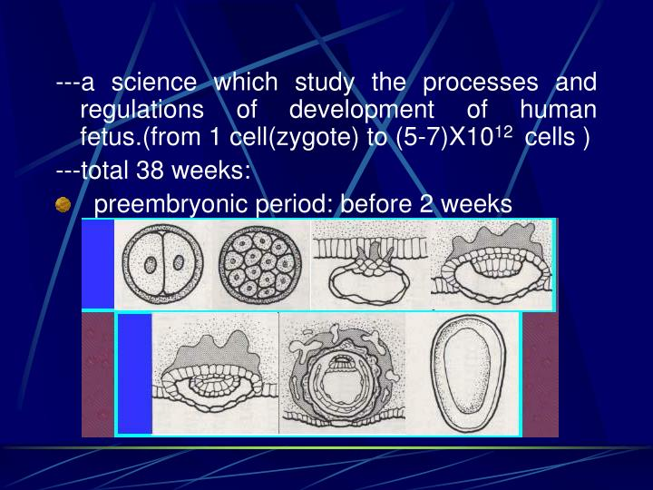 ---a science which study the processes and regulations of development of human fetus.(from 1 cell(zygote) to (5-7)X10